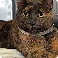 Adopt A Pet :: Priscilla - Fairfield, CT
