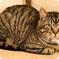 Adopt A Pet :: Napolean - Fairhope, AL