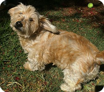 Terrier (Unknown Type, Small) Mix Dog for adoption in El Cajon, California - Max