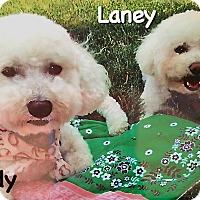 Adopt A Pet :: Laney - East Hanover, NJ