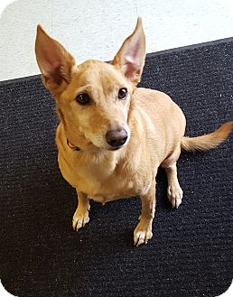 Terrier (Unknown Type, Small) Mix Dog for adoption in Bryan, Ohio - Kadie