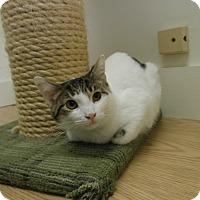 Adopt A Pet :: Chord - Milwaukee, WI