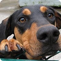 Adopt A Pet :: Sheila - South Dennis, MA