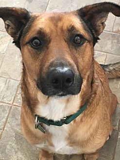 Shepherd (Unknown Type) Mix Dog for adoption in Hewitt, New Jersey - Lucky