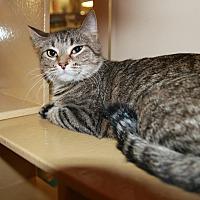 Adopt A Pet :: Racer - Rochester, MN