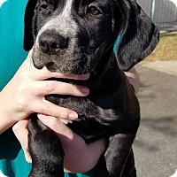 Adopt A Pet :: Tuna - Gainesville, FL