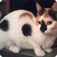 Adopt A Pet :: MINKSIE - Powder Springs, GA