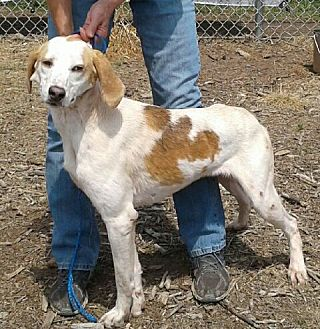 Coonhound Mix Dog for adoption in Newberry, South Carolina - Berry