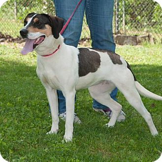 Mixed Breed (Medium)/Hound (Unknown Type) Mix Dog for adoption in Wilmington, Delaware - Jan