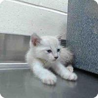 Adopt A Pet :: A381069 - Orlando, FL
