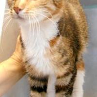 Adopt A Pet :: Callie - Oskaloosa, IA