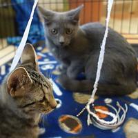 Adopt A Pet :: Cherry - Westampton, NJ