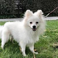 Adopt A Pet :: Potato Chip - Palo Alto, CA