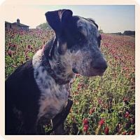 Adopt A Pet :: Remy - Houston, TX