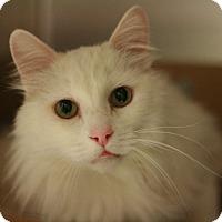Adopt A Pet :: Linus - Canoga Park, CA