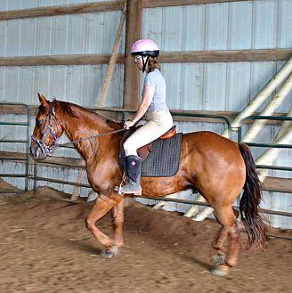 Morgan/Quarterhorse Mix for adoption in Sidell, Illinois - Oscar