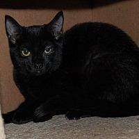 Adopt A Pet :: Lunar - Brainardsville, NY