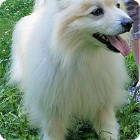 Adopt A Pet :: Gizmo - Richmond, VA