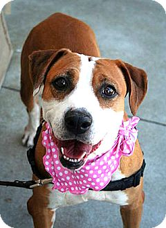 Hound (Unknown Type) Mix Dog for adoption in Vista, California - Becky