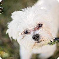 Adopt A Pet :: Benny - Kingwood, TX