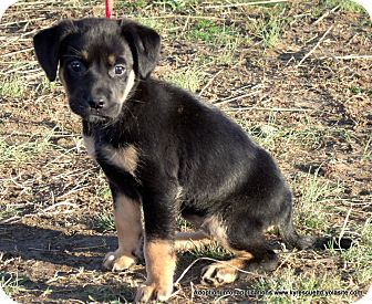 Pug/Terrier (Unknown Type, Small) Mix Puppy for adoption in parissipany, New Jersey - BREI~ADOPTED
