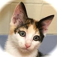 Adopt A Pet :: Calypso - Palo Alto, CA