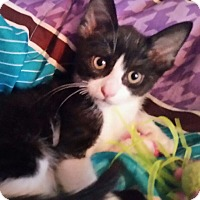 Adopt A Pet :: Whiskers - Staten Island, NY