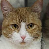 Adopt A Pet :: MARIGOLD - Decatur, IL