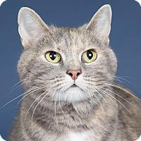 Adopt A Pet :: Maggie - Wheaton, IL