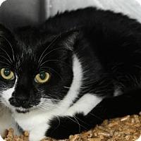 Adopt A Pet :: Omora - Hilton Head, SC
