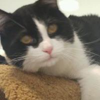 Adopt A Pet :: Alvin - Potsdam, NY