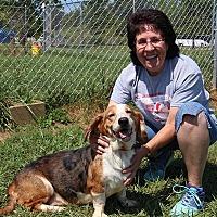 Adopt A Pet :: Callie - Elyria, OH