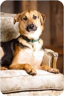 German Shepherd Dog Mix Dog for adoption in Portland, Oregon - Jake
