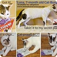 Adopt A Pet :: Luna - Atlanta, GA