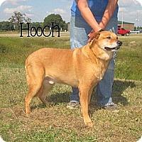 Adopt A Pet :: Hooch - Clinton, ME