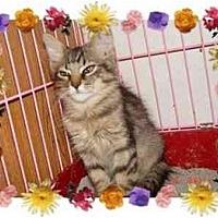 Adopt A Pet :: THUMPER - KANSAS, MO