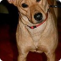 Adopt A Pet :: Kanga - Hastings, NY