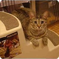 Adopt A Pet :: Juliette--PETSMART - Muncie, IN