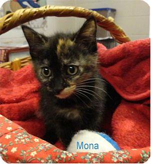Domestic Shorthair Kitten for adoption in Ozark, Alabama - Mona