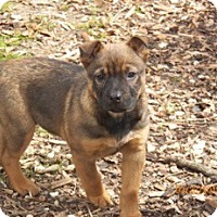 Adopt A Pet :: JoJo - Adamsville, TN
