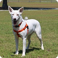 Adopt A Pet :: Ivory-ADOPTED - Pinehurst, NC