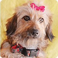 Adopt A Pet :: Doodles - Littlerock, CA