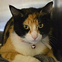 Adopt A Pet :: Ming-Ming - Beaumont, TX
