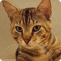 Adopt A Pet :: Tabby Too - Grayslake, IL