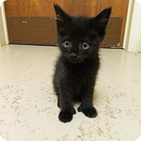 Adopt A Pet :: Hemi - Randleman, NC