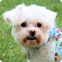 Adopt A Pet :: Bubu - San Francisco, CA