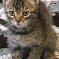 Adopt A Pet :: Jackie - Bastrop, TX