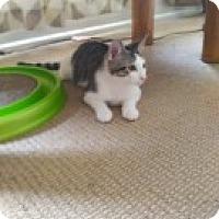 Adopt A Pet :: Beau - McHenry, IL