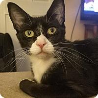 Adopt A Pet :: Fancy - Greenville, NC