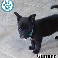 Adopt A Pet :: Gunner - Kimberton, PA